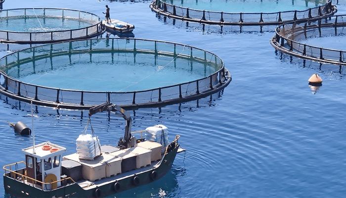 Productos de la Pesca y Acuicultura